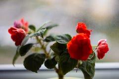 Ingemaakte bloemen op de vensterbank stock foto's
