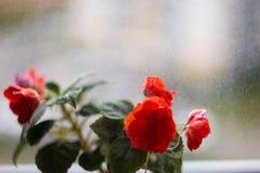 Ingemaakte bloemen op de vensterbank royalty-vrije stock foto