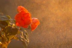 Ingemaakte bloemen op de vensterbank stock foto