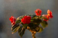 Ingemaakte bloemen op de vensterbank stock afbeeldingen