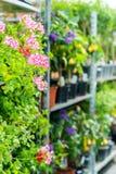 Ingemaakte bloemen op planken in tuinwinkel Royalty-vrije Stock Afbeelding