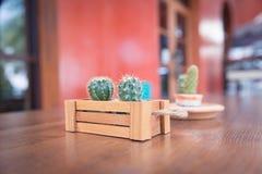 Ingemaakte cactus Stock Foto