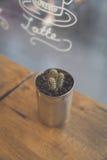 Ingemaakte cactus Stock Afbeeldingen