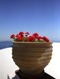 Ingemaakte geranium stock afbeeldingen