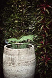 Ingemaakte installatie tegen donkergroene muur Varen in een grote ceramische pot Stock Foto
