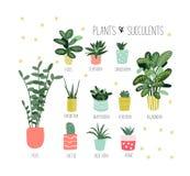 Ingemaakte installatiesinzameling succulents en huisinstallaties Hand getrokken vectorart. stock illustratie