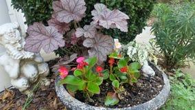 Ingemaakte rode begonia's en purpere astilbe naast witte pleisterpan met fluit en andere greens in het bed van de de lentetuin Royalty-vrije Stock Afbeeldingen
