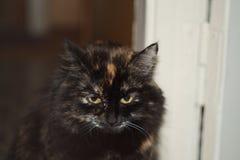 INGEN Head härlig inhemsk katt #1 Arkivfoto