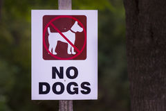 Ingen hundkapplöpning Arkivbilder