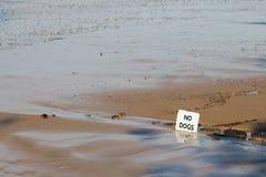 INGEN HUNDKAPPLÖPNING undertecknar på den Torquay bränningstranden i Victoria, Australien Royaltyfri Fotografi