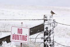 Ingen jakt undertecknar med fågeln Arkivbild