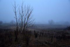 Ingen leavsbuske i den dimmiga ofruktbara marken Royaltyfri Fotografi