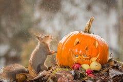 Ingen mer halloween Fotografering för Bildbyråer