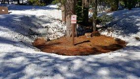 ` Ingen parkerings`-allsång i mitt av skogen under snö Arkivfoton