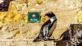Ingen tillträde eller utgång för pingvin? Arkivfoton