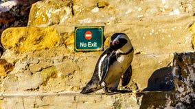 Ingen tillträde eller utgång för pingvin? Arkivbild