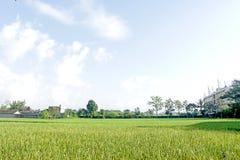 Ingen vidd av risfält bak byggnaden Arkivfoto