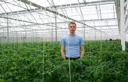 Ingeniero de la agricultura Fotos de archivo libres de regalías