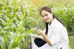 Ingenieur die van de biotechnologie de Aziatische vrouw installatieblad onderzoeken royalty-vrije stock foto's
