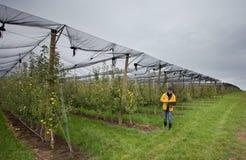 Ingenieur im Obstgarten Lizenzfreies Stockfoto