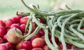 Ingerdients томата и фасоли двора длинные животика сома салата папапайи Стоковое Изображение