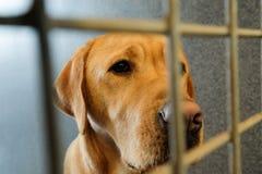 Ingesloten hond royalty-vrije stock afbeelding
