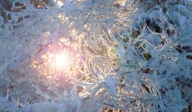 Ingesneeuwd de winterbos Stock Foto's