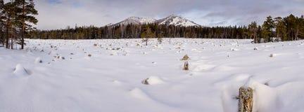 Ingesneeuwd de winterlandschap met bergpiek Stock Afbeeldingen
