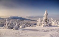 Ingesneeuwd de winterlandschap met sneeuw behandelde bomen stock afbeelding