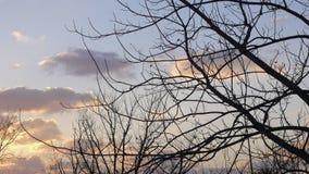 Inget anseende för träd för bladträd A i ett stupat utan sidor Arkivfoto