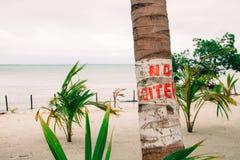 Inget söla tecknet på palmträdet och det mulna karibiska havet arkivbild
