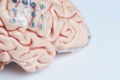 Ingevingen die elektroden op hersenen modeloppervlakte registreren royalty-vrije stock fotografie