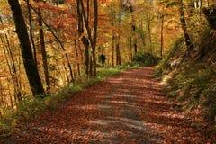 Inghiai la depressione principale della strada una scena dorata di autunno della foresta del faggio Immagine Stock