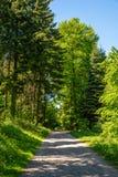 Inghiai la strada attraverso la foresta verde, Velbert fotografia stock libera da diritti