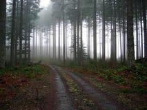 Inghiai la strada nella nebbia Fotografia Stock Libera da Diritti
