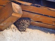 Inghiotta il nido sulla parete di un appartamento immagine stock libera da diritti