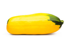 Ingiallisca lo zucchini Fotografia Stock Libera da Diritti