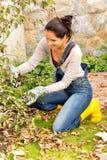 Inginocchiamento di giardinaggio del cortile di caduta del cespuglio della donna felice fotografia stock libera da diritti