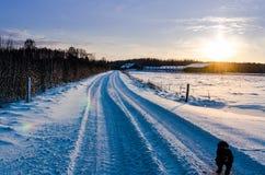 Inglês cocker spaniel em uma estrada nevado Imagem de Stock Royalty Free