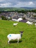 Inglaterra: casas de piedra de la terraza con las ovejas Imágenes de archivo libres de regalías