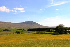 Ingleborough across buttercup meadow near Ivescar Stock Images