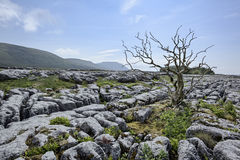 Ingleborough Royalty Free Stock Images