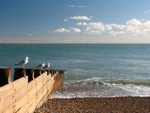 Ingles del mar Imágenes de archivo libres de regalías
