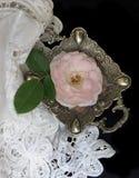 Inglese Rosa Fotografia Stock Libera da Diritti