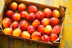Ingleses Victoria Plums imagens de stock royalty free