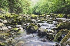 Ingleton-Wasserfälle, Yorkshire, Großbritannien stockfotografie