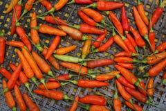 Ingrédient vert rouge de poivre de piment de vue supérieure pour la nourriture thaïlandaise de soupe épicée chaude à Tom Yum Chil Photo libre de droits