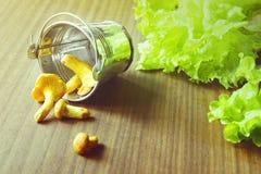 Ingrédients de nourriture : salade et chanterelles Photos stock