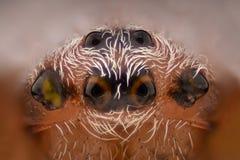 Ingrandimento estremo - ragno della vespa, bruennichi del Argiope Immagini Stock Libere da Diritti