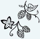 Ingrediënten voor bier hop Stock Afbeeldingen